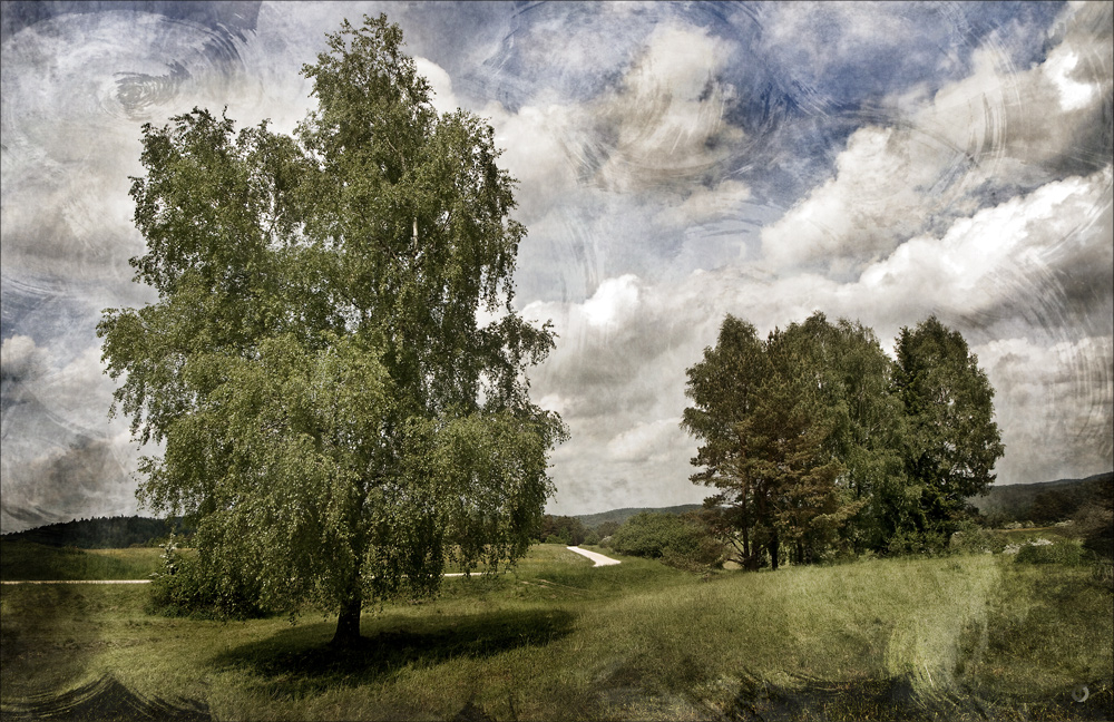 Birke bei Alfeld